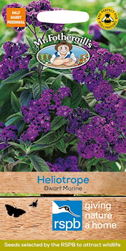 heliotrope-dwarf-marine-1