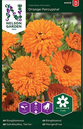 ringblomma-orange-porcupine-1