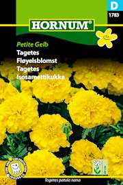 tagetes-petite-gelb-1