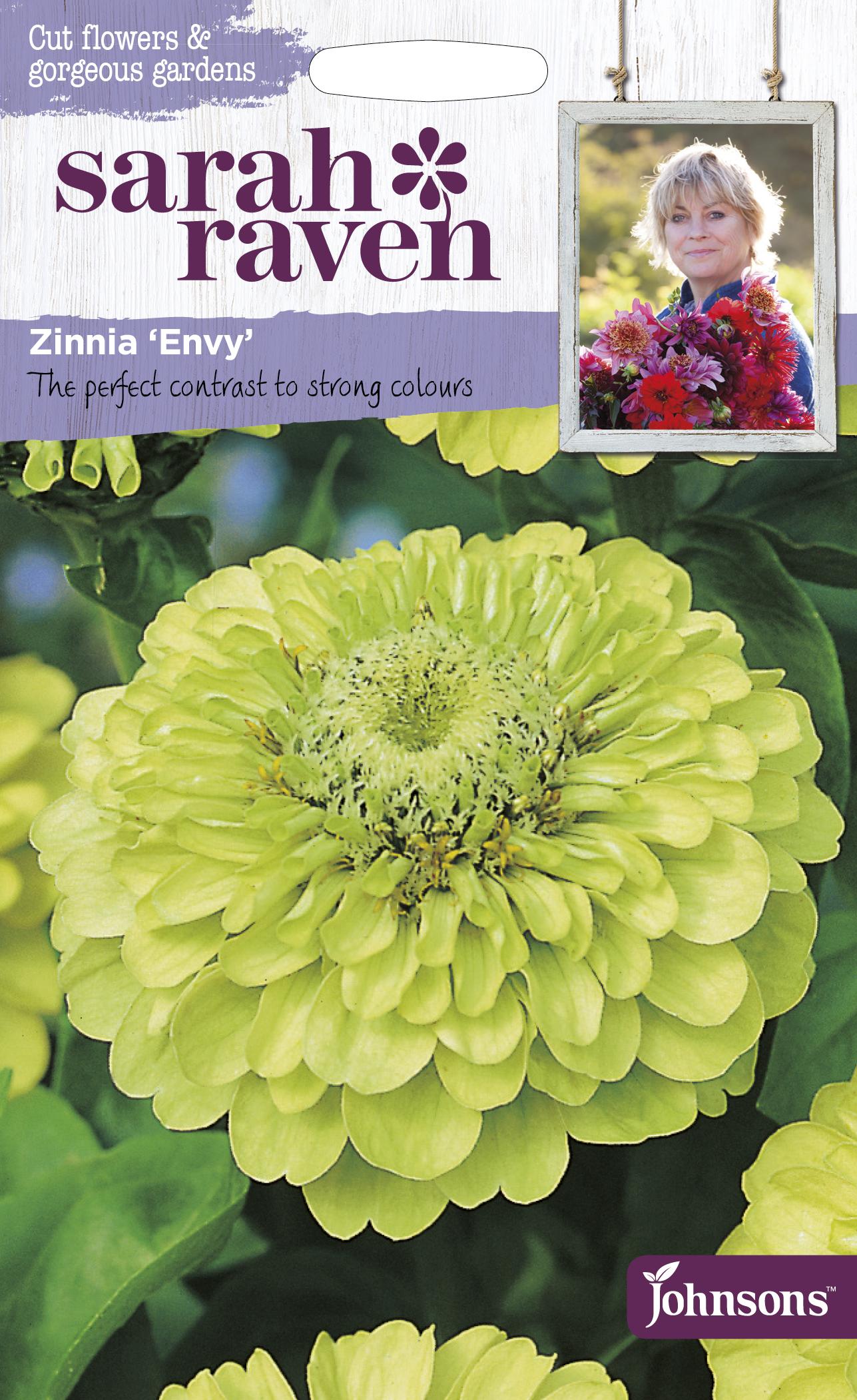 Zinnia 'Envy
