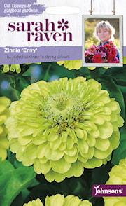 zinnia-envy-1