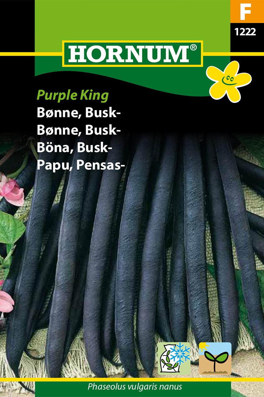 Böna, Busk- 'Purple King
