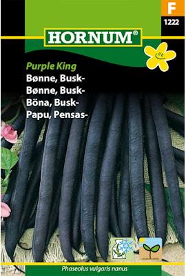 bna-busk--purple-king-1