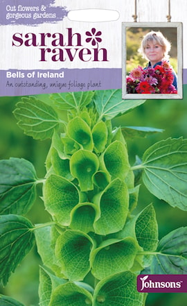musselsyska-bells-of-ireland-1