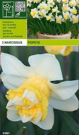 narciss-popeye-1