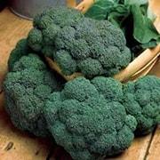 broccoli-3-plantor-1