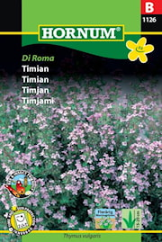 timjan-di-roma-1