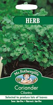 koriander-cilantro-1