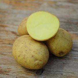 ekologisk-potatis-almonda-1kg-1