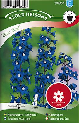 riddarsporre-trdgrds--blue-bird-bl-1