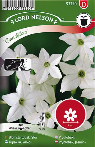 Blomstertobak, Stor-, Grandiflora, vit
