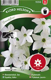 blomstertobak-stor--grandiflora-vit-1