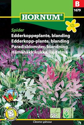paradisblomster-mix-spider-1