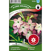 blomstertobak-avalon-limepurple-f1-1