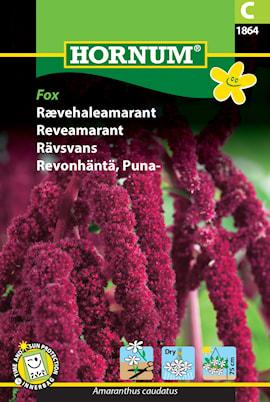 rvsvans-fox-1