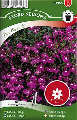 lobelia-hng--red-cascade-1