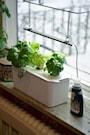 hydroponisk-odling-harvy--3-vit-4