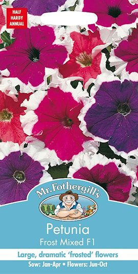 petunia-frost-mixed-f1-1