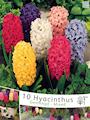 hyacint-storpack-blandad-4