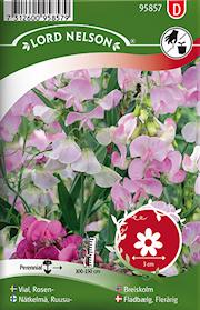 rosenvial-rosa-flerrig-1