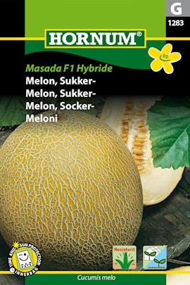 melon-nt--masada-1