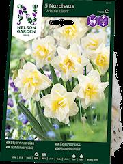 stjrnnarciss-white-lion-5st-1