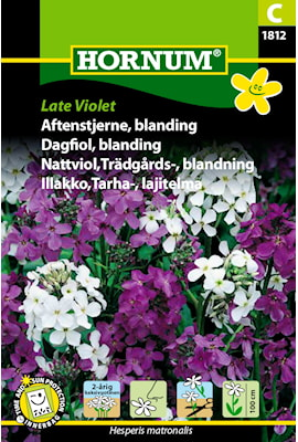 nattviol-trdgrds--late-violet-1