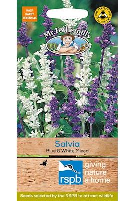 daggsalvia-blue-white-mixed-1