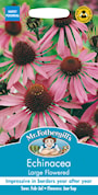rudbeckia-large-flowered-1