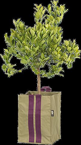 plantkasse-blueberry-medium-army-21l-1