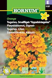 tagetes-liten-orange-1