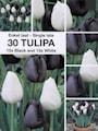 tulpan-black-white-3