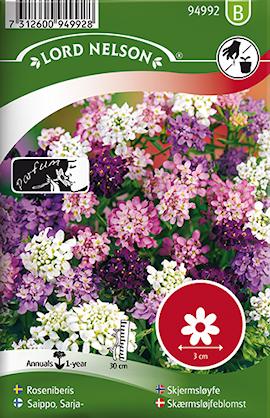roseniberis-bl-frger-1