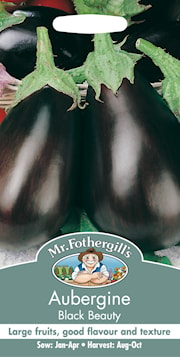 aubergine-black-beauty-1