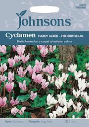 hstcyklamen-hardy-mixed---hederifolium-1