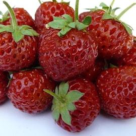 framberry-mieze-schindler-7cm-kruka-1