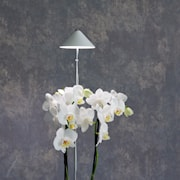 sunlite-orchid-vxtlampa-vit-10w-teleskopstati-1