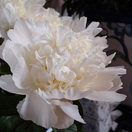 pion-charles-white-1st-1