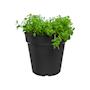 green-basics-growpot-dia-11-cm-living-black-1