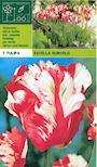 tulpan-estella-rijnveld-2