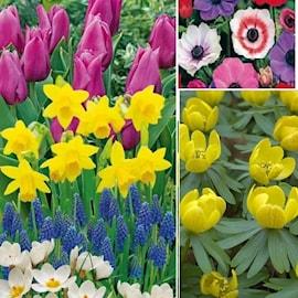 kollektion-blommande-lk-100-days-flowering-st-1