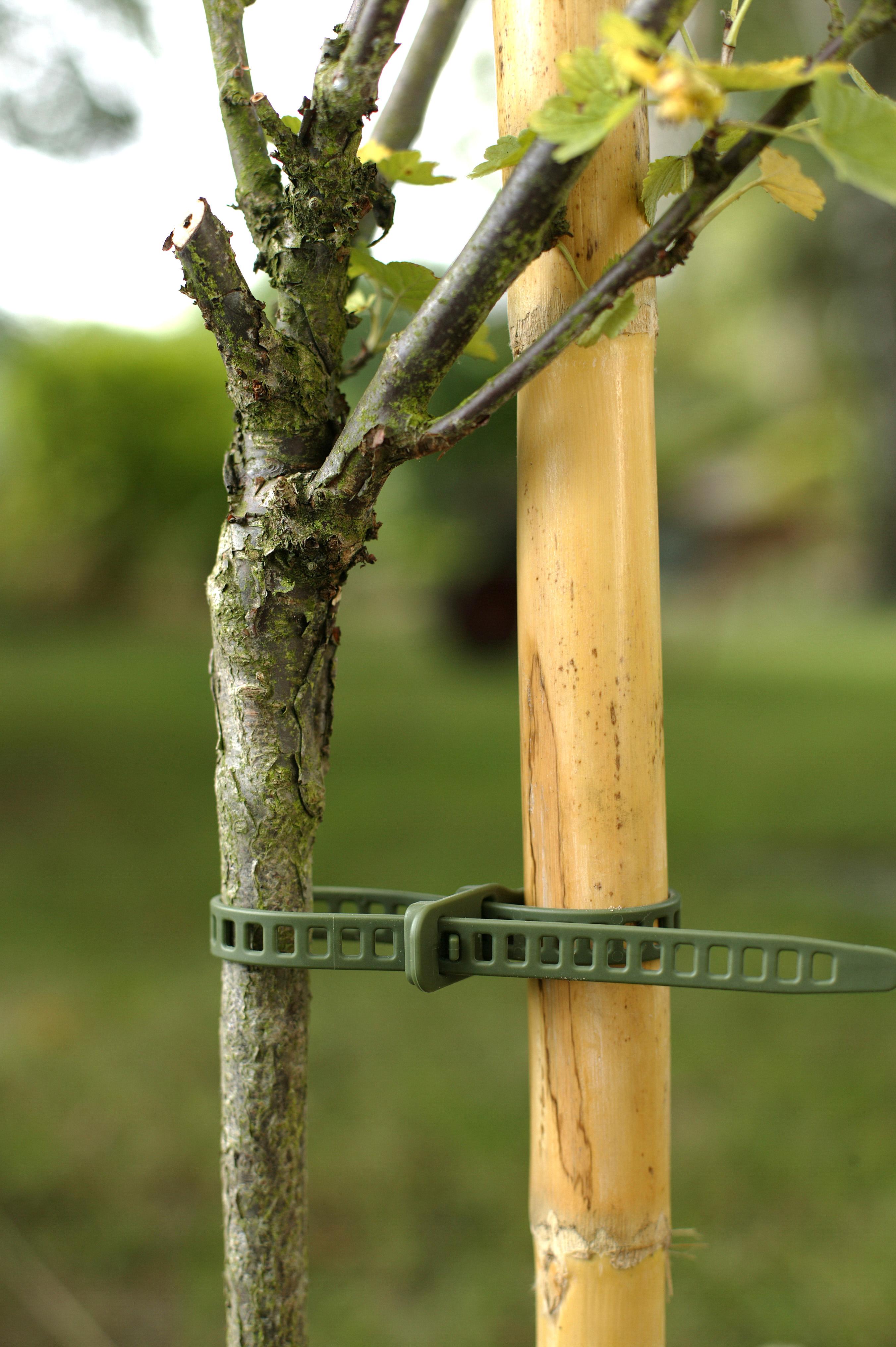 Bindtråd 'Treefix' L, 6-p
