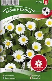 tusenskna-meadow-daisy-vildform-vit-1