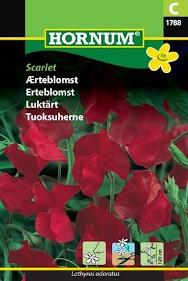 luktrt-scarlet-1