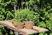 planteringskruka-kokosfiber-1l-1