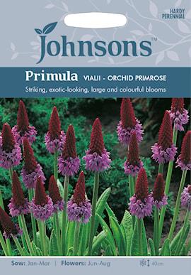 hyacintviva-orchid-primrose-1