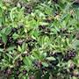 svartaronia-hugin-2-35l-2