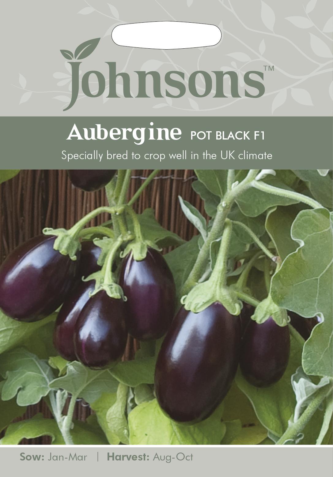 Aubergine 'Pot Black F1