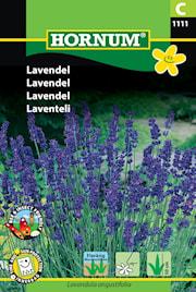lavendel-1