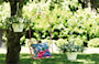 corsica-hanging-basket-30cm-lovely-blush-5